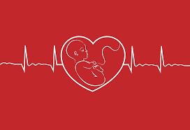 babys-heartbeat-in-pregnancy