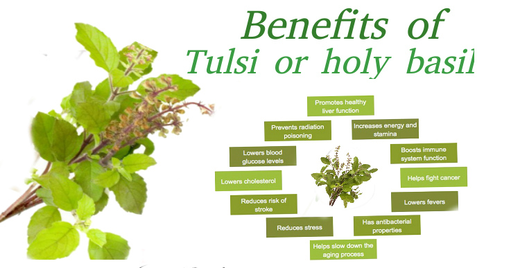 Basil-(Tuls )-Leaves-Health-Benefits