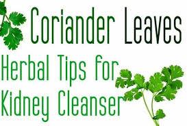 Coriander-Juice-for-Kidney1
